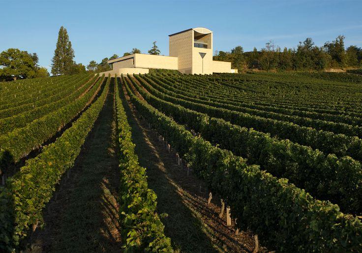Les 43 meilleures images du tableau notre jardin our for Grand jardin wine