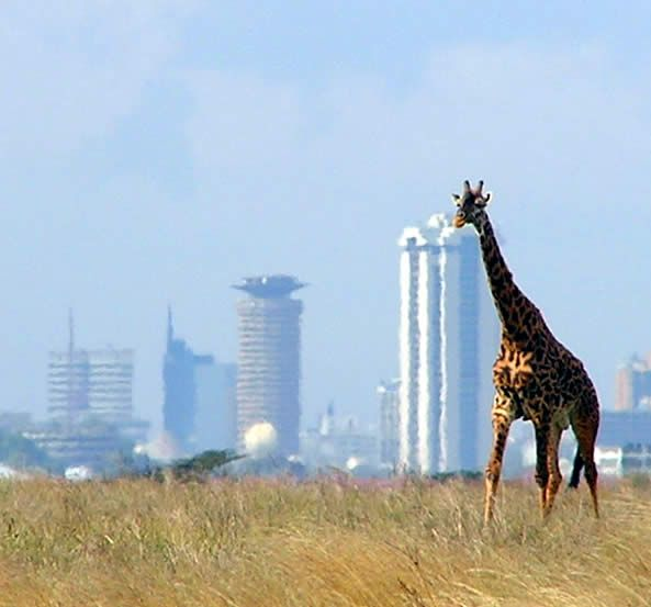 Nairobi, Kenya - the country's capital city can attract visitors of the wild side. I loved traveling to Nairobi, Kenya and Addis Abba, Ethiopia.  It was a wonderful eye opener. I long to visit other African Countries.