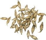 What is cumin? Spice description, growing, cooking tips and recipes, preparation and storage info. Also featuring the many health benefits of cumin.