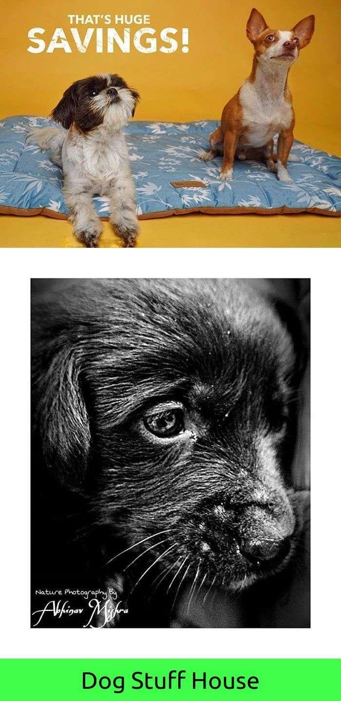 Funny dog on the beach video bird dog training pinterest dog