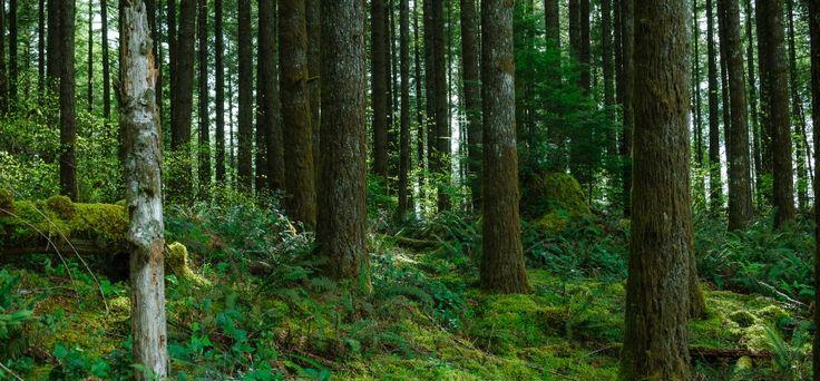 Koniec z wnioskami o wycinkę drzew? Ministerstwo Środowiska szykuje rewolucyjne zmiany | Telewizja Republika