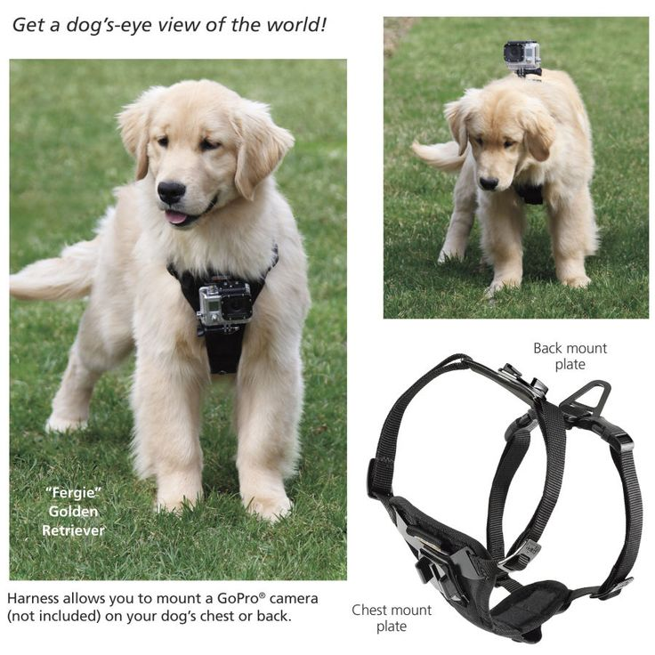 Dog harness with a GoPro mount