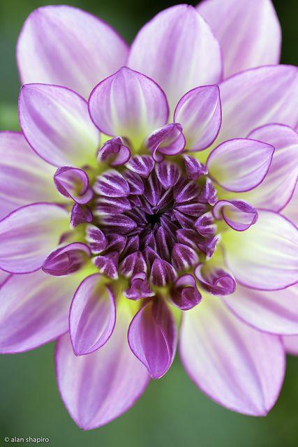 livrer des fleurs 19 #fleurs #bouquet