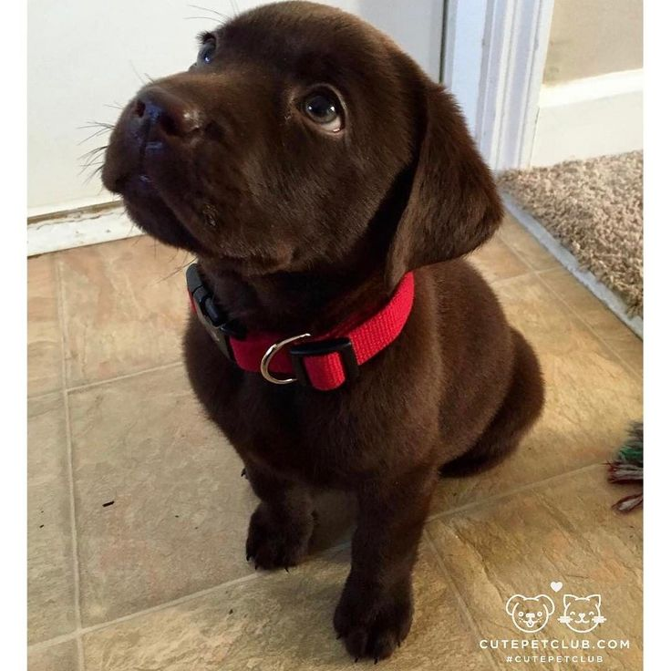 From @snake_thelab: They say red is my color but I dont know what theyre talking about because Im pretty sure this collar is grey #cutepetclub [source: http://ift.tt/2iUKcx2 ]