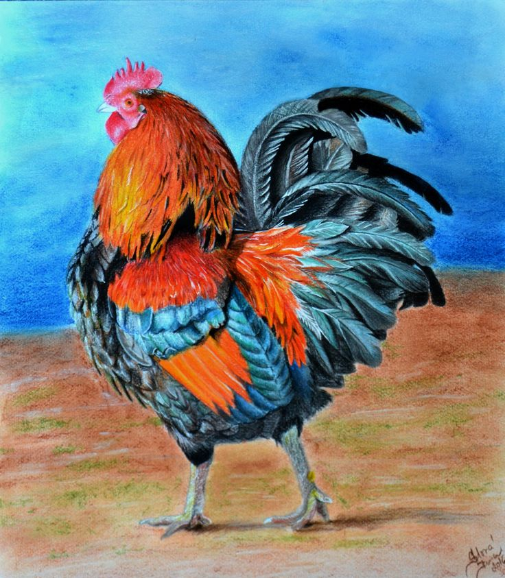Rooster 35x29, crayons, pastel, marker...