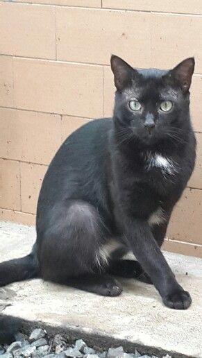 Asrrael - funny black cat.
