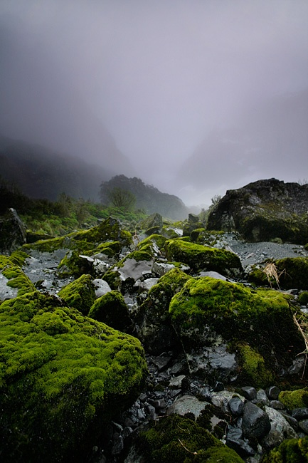 Stills Photo Tours, David Still - Dense fog kisses the moss in the valleys of the Southern Alps