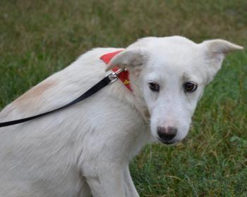 July - junges Hundemädel in Rumänien wartet auf ein Zuhause