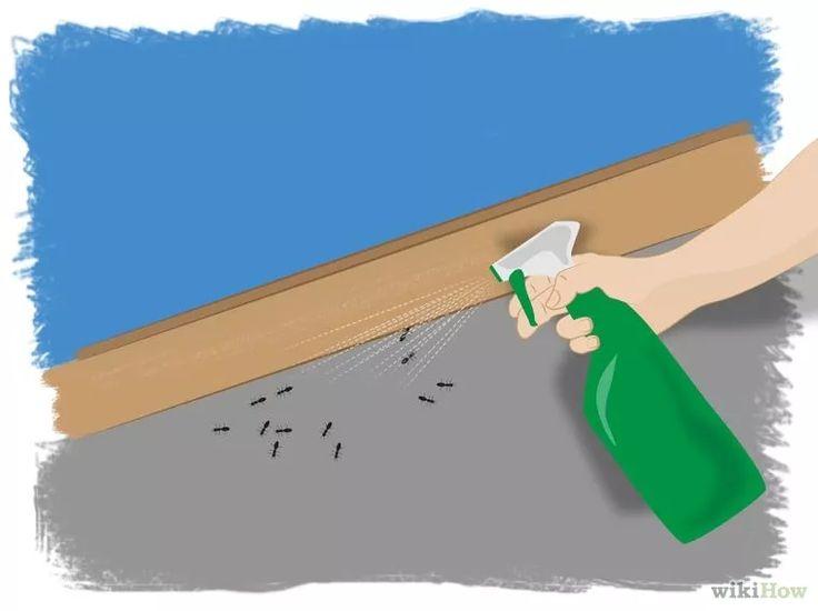 17 meilleures id es propos de tuer les fourmis sur for Astuce moucherons cuisine