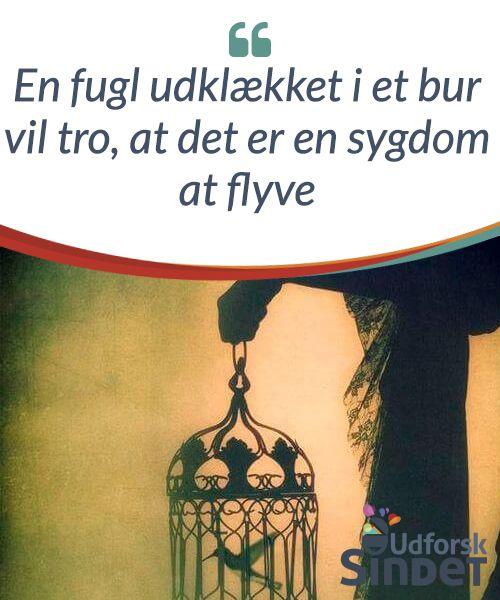 En fugl udklækket i et bur vil tro, at det er en sygdom at flyve  En fugl er født til at være fri. Så hvis den låses inde i et bur, vil den føle, at hele dens tilværelse begrænses til et lillebitte sted.  #Anekdoter