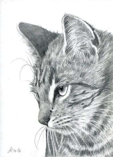 Tabby Cat Original Painting Drawing Graphit Kitten Chat Tiger Katze Art AiA