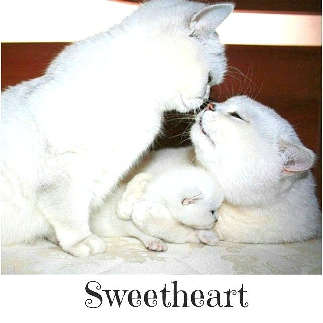Meow meow! Follow me? I'm cute