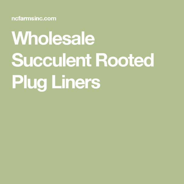 Wholesale Succulent Rooted Plug Liners