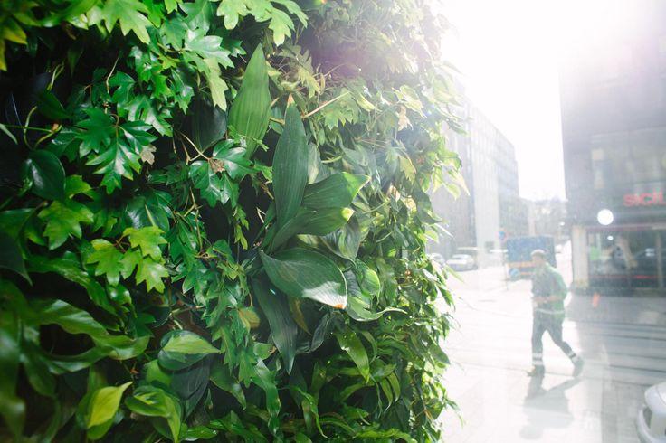 Suomessa kehitettiin ilmaa puhdistava seinä – oppia saatiin avaruudesta asti Kasvit käyttävät ravinnoksi ilman epäpuhtauksia, jos niiden juuret eivät ole mullassa.