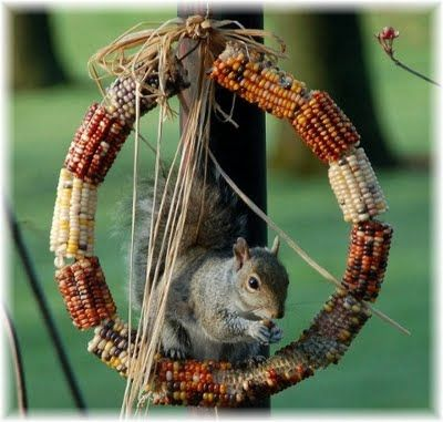 This corn wreath is a cute idea & I know, what ever I put out for the birds, these little fella's will find it too!