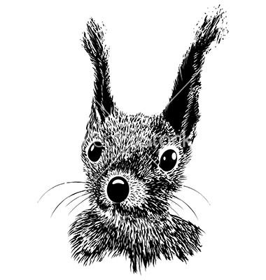 284 Best Images About Squirrels Sketches On Pinterest