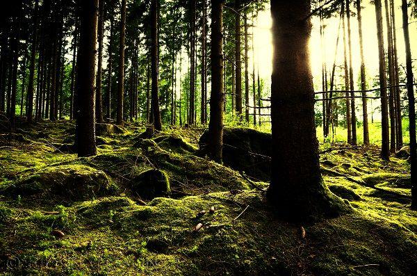 Quantas espécies de árvores habitam o nosso planeta? E quantas estão em risco por influência humana?