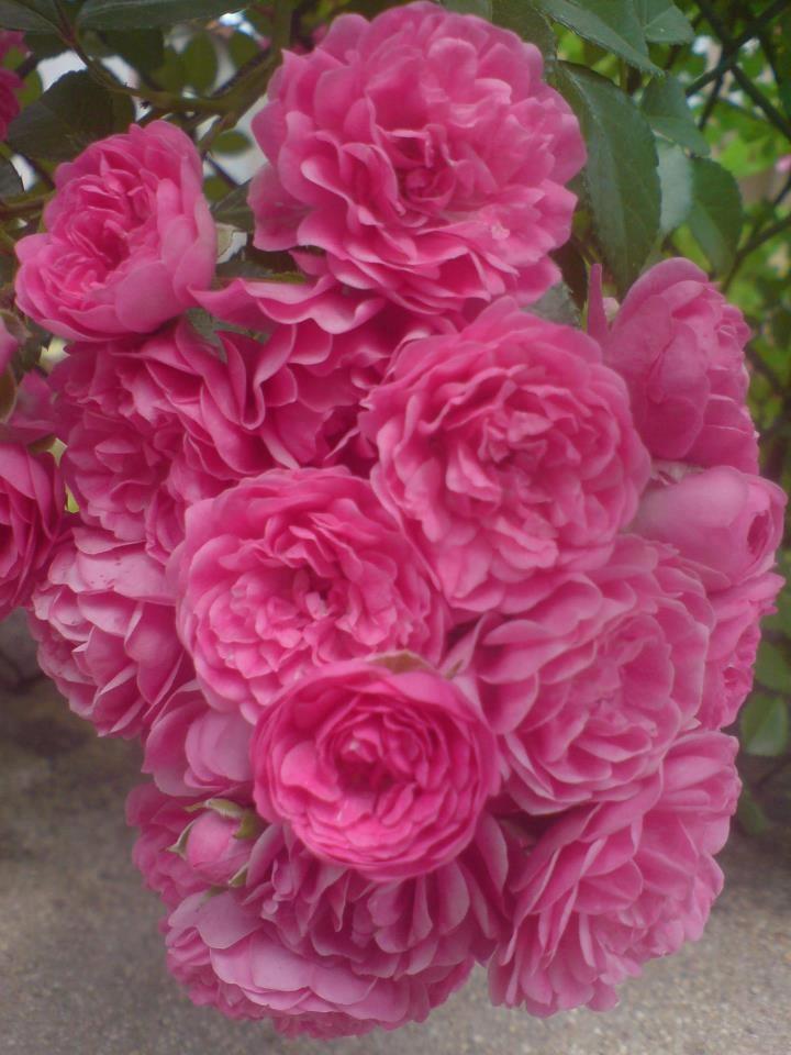 Flores Especiales, Wildflowers, Flores Frutos, Flore Especi