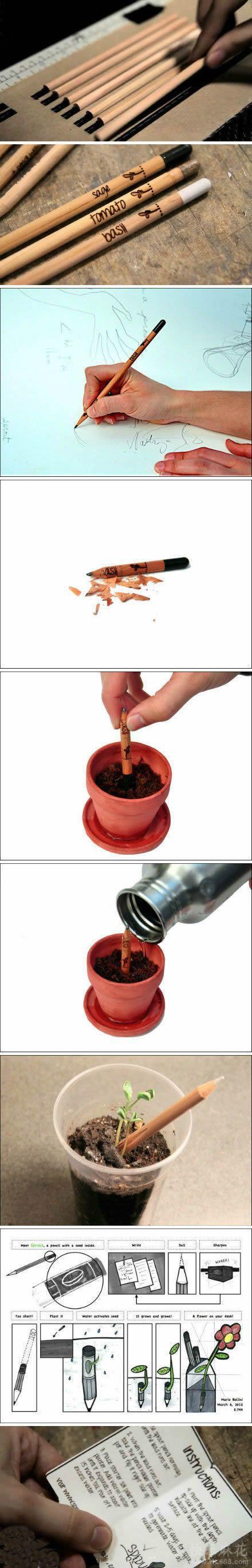 Con lápiz semilla