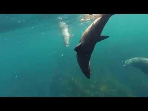 Swimming With Seals | Wild Ocean Tasmania
