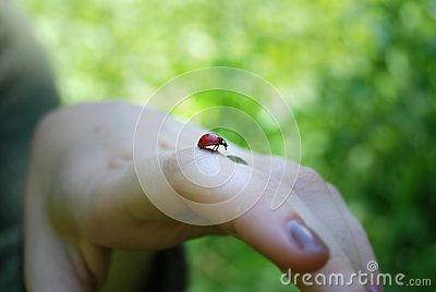 Close-up of a red little ladybug going out for a walk on a hand