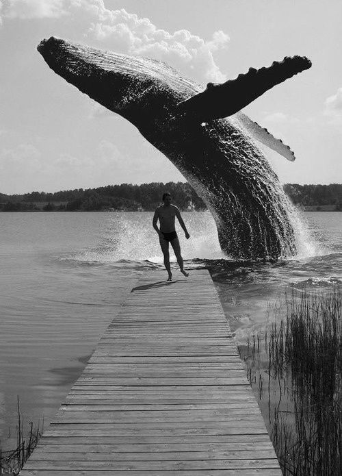 La baleine, Waaaouu!!