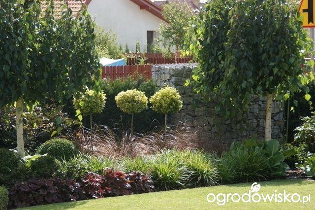 Madżenie ogrodnika cz. aktualna - strona 125 - Forum ogrodnicze - Ogrodowisko