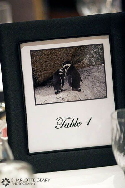 Table numbers -- soooo cute! idk of we can find that many cutesy kissy animal pics though lol