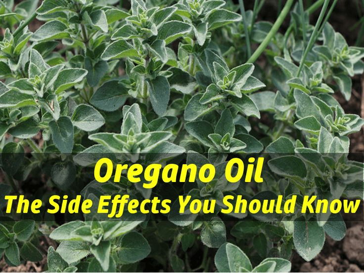 Oregano oil side effects are usually mild and typically occur due to an overdose or when it is used incorrectly. Common oregano oil side effects may include upset stomach and diarrhea when consumed internally, and skin irritation when used topically. According to the medical literature, internal use of oregano oil can cause low blood pressure (source) and may also influence the good bacteria (source) in the gut.