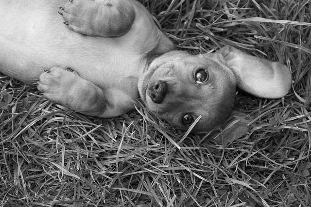Visit www.miniature-dachshund .co.uk which is worldwide a very popular Dachshund website ranking top 3 on Google searches.  Also visit, follow and share my Miniature Dachshund UK blod http://miniaturedachshunduk.blogspot.co.uk .  Take a look through all my photos.  Please PLEASE share/repin as many photos as you can.  Thankyou