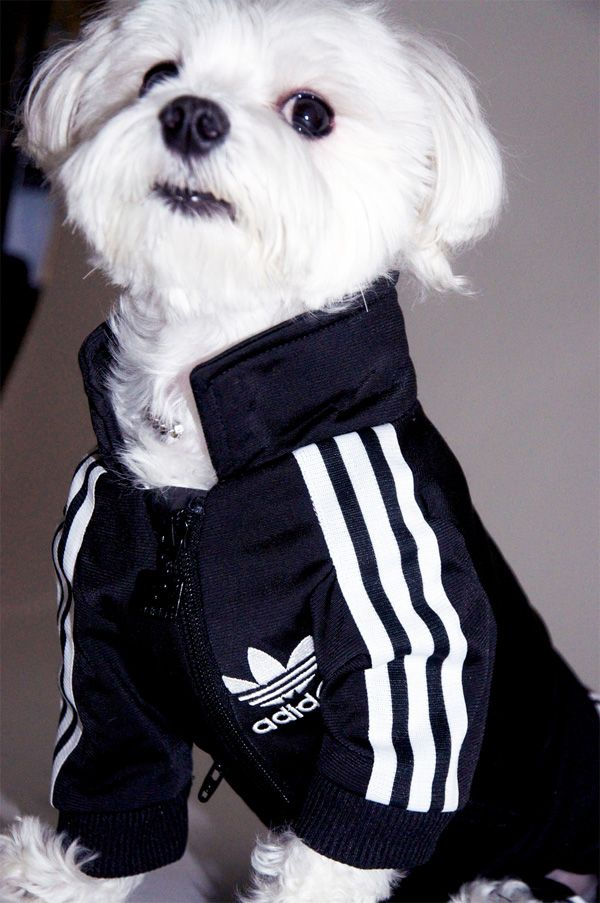 Adidas track suit for pups!