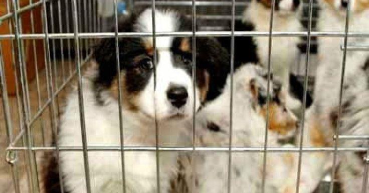Animales Confinados en Jaulas Sucias Por Dinero FIRMA Y COMPARTE ESTA PETICIÓN AHORA!