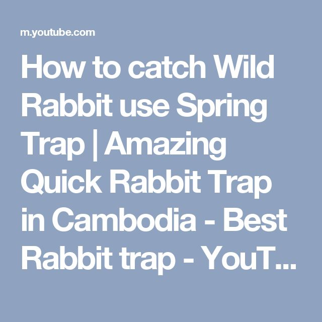 how to catch a wild rabbit with your hands