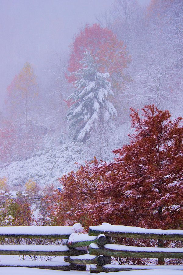 Early snow during the fall color show in the North Carolina mountains near Asheville
