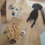 It's a Dog's Life-Part 6