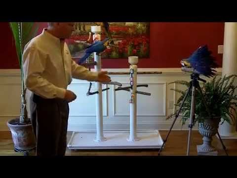 Daniel Walthers provides instructions for building your own parrot stand