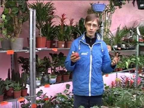 Сорта яблонь для Сибири и Урала: лучшие сорта для северных регионов