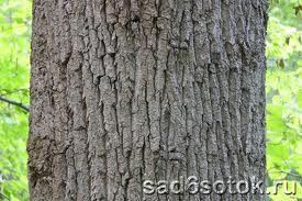 кора, стволы деревьев - Поиск в Google