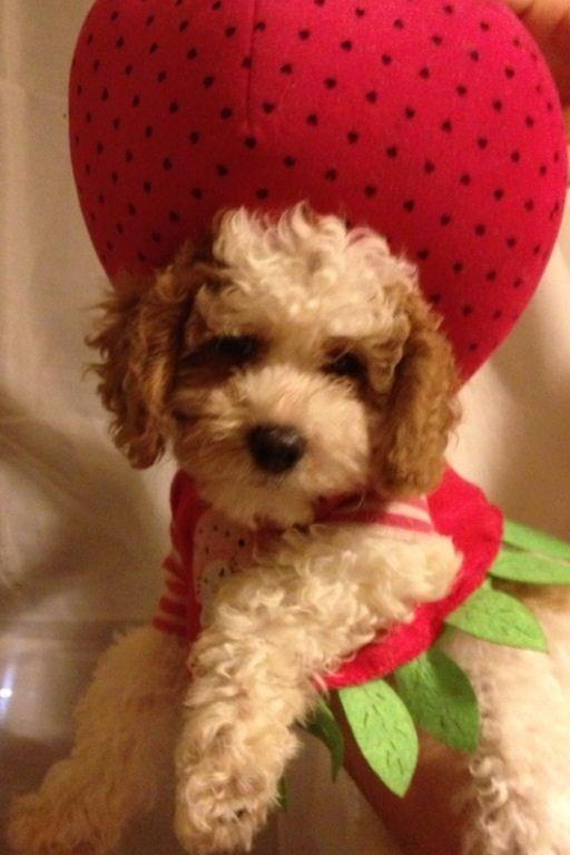 Animals image: Berry Cute Puppy: BerryCute ecard photos