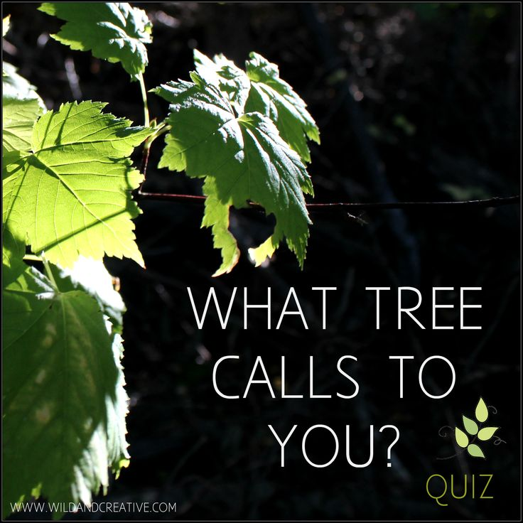 What tree calls to you? -Personality Quiz Click to take the free quiz! www.wildandcreative.com #personalityquiz #free