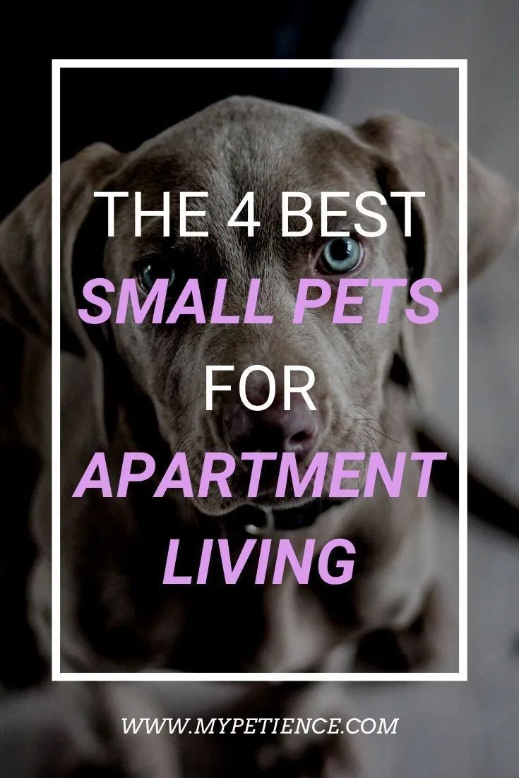 The Best Small Pets For Apartments Small Pet Carrier Tips Best Small Pets Small Pet Carrier Small Pets For Kids
