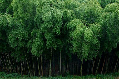 gawgus trees