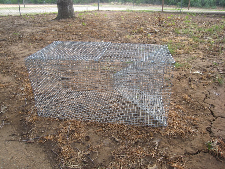 how to make a homemade snake trap