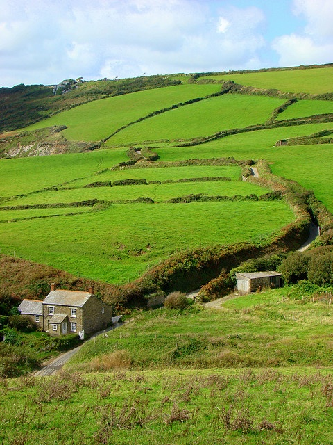 Hemmick, Cornish coast.    Look at the hedgerows.