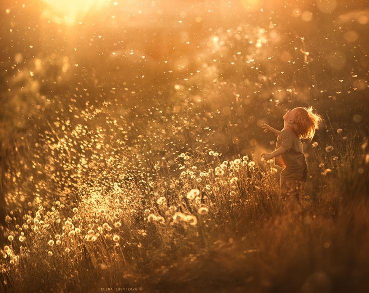 dandelion feeling.. - null