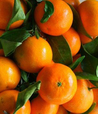 Какие лучше выбрать мандарины – из Испании, а может из Абхазии или Израиля, но из Турции
