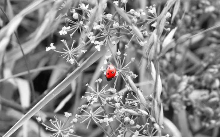 Ladybird Selective Coloring