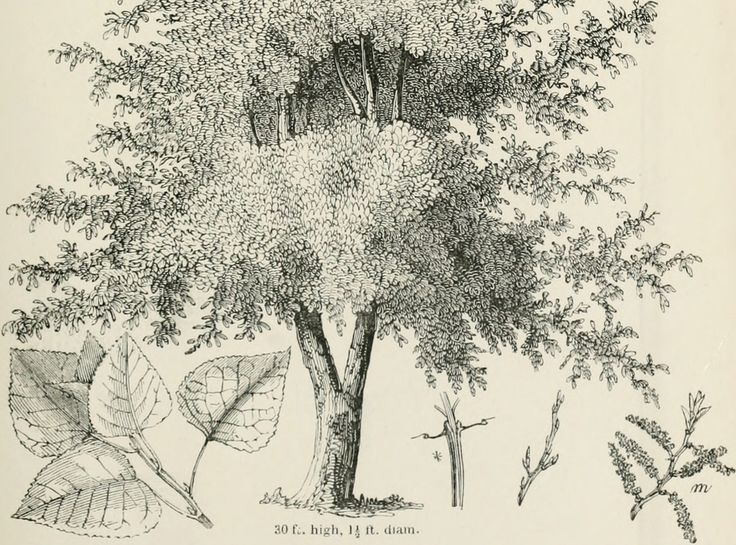 drawing trees dover art instruction