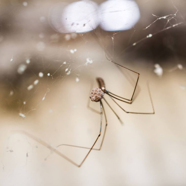 Die besten 25+ Spinnen fernhalten Ideen auf Pinterest